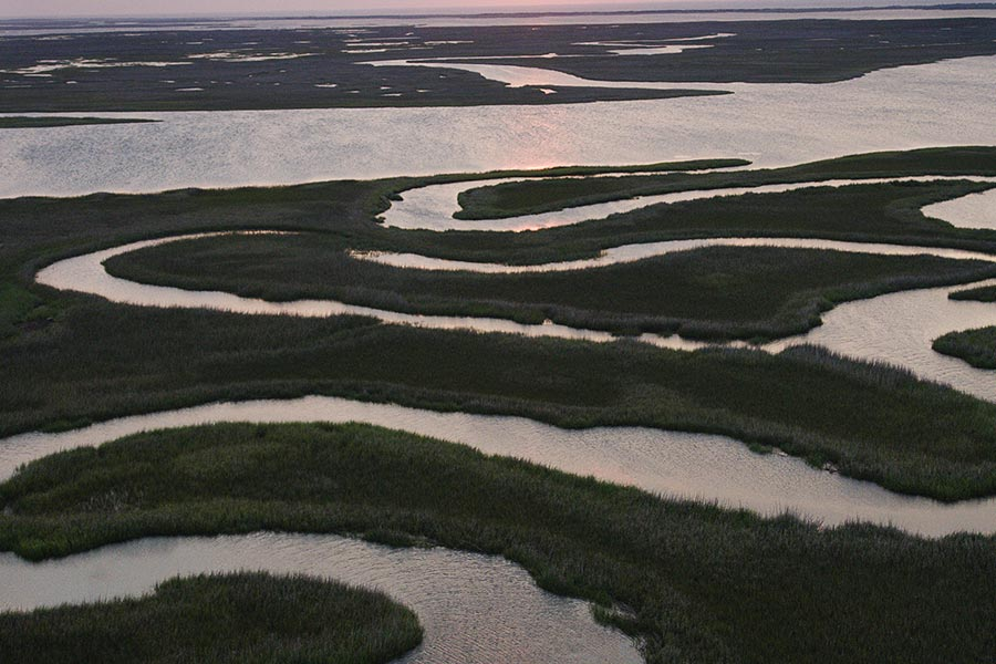 A number of creeks shape the Intracoastal Waterway and provide a safe haven for birds and fish alike.